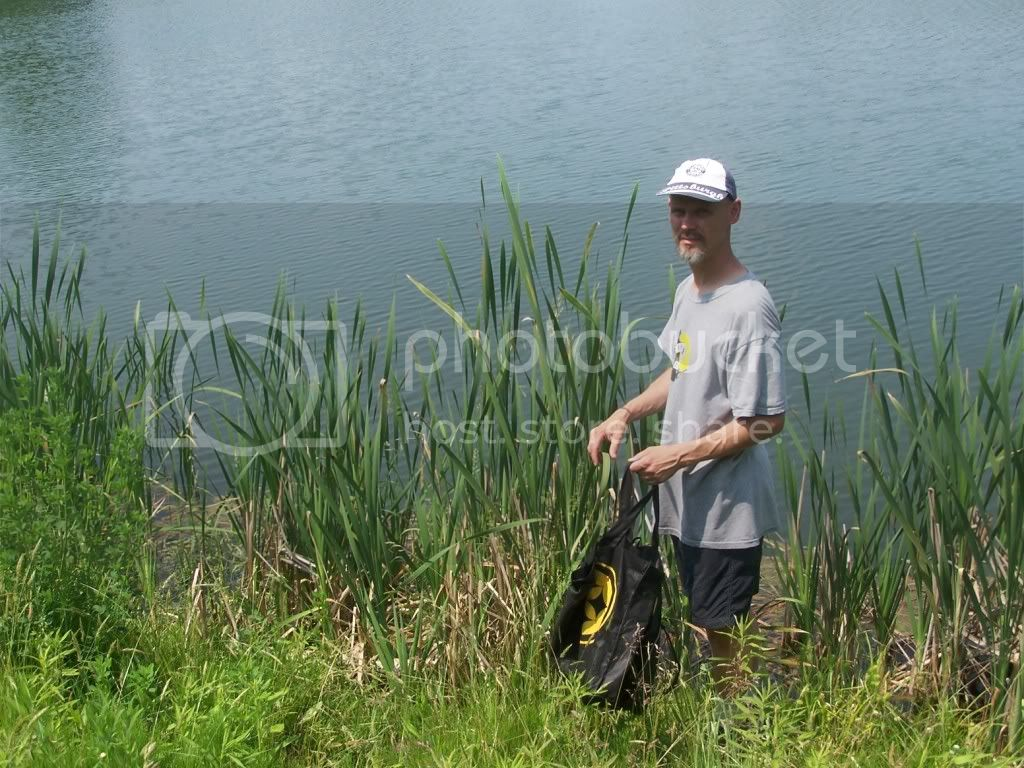 cattail harvest dave
